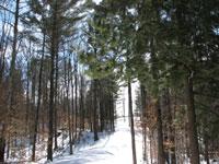 Stigur Trail, Hartland