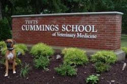 TuftsCummings_1