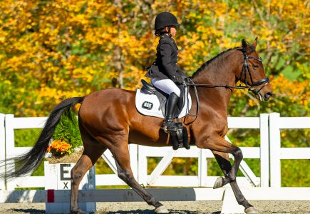 PIC - Fall Dressage Youth