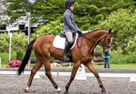 2017-june-horse-trials-slater-dressage